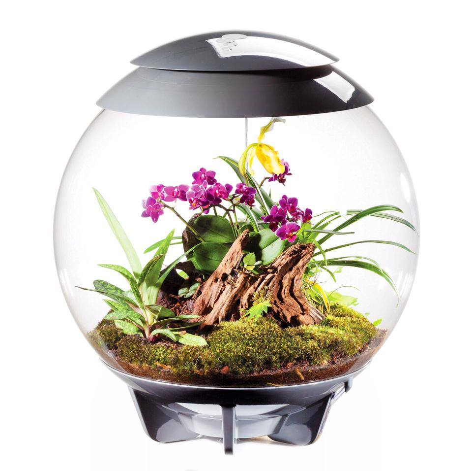 Biorb Air Terrariums