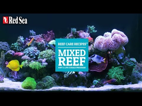 Mixed Reef  Recipe