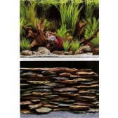 Marina Planted Oasis and Slate Wall Background 12""