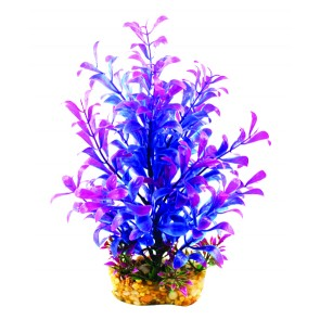 Aqua One Vibrance Blue Hygrophila Medium 20cm