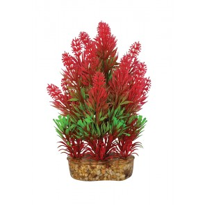Aqua One Vibrance Red Rotala Small 10cm