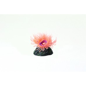 Natureform Mini Anemone Mushroom Pink - Anemonia sp. Synthetic Coral 3.5 x 3.5 x 4cm