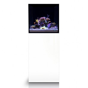 Evolution Aqua 450s Reef Aquarium