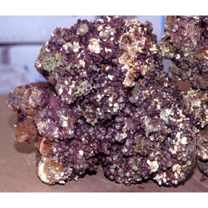 Real Reef Rock Premium 1kg