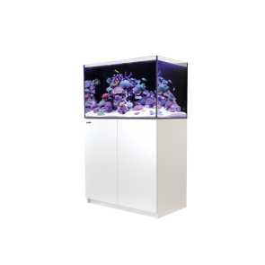 Red Sea Reefer 250 in White