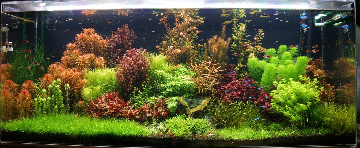 A high-tech planted tank